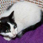 Meet Xabi Kitten