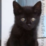 Cute Black Kitten