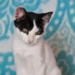Xabi Kitten