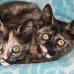 Cute Sister Kittens