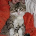 VERY Happy Kasper Cat