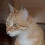Meet Ginger Jasper
