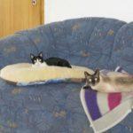 Monty & Mimi in Germany