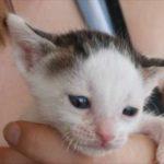 Baby Felix Kitten