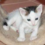 Very Cute Felix Kitten