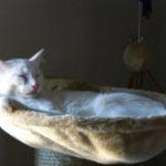 Julius & Caesar Kittens
