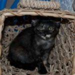Meet Ruthie Kitten