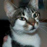 Meet Mira Kitten