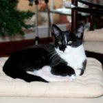 Marty Kitten Photo Update