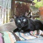 RIP Gizmo The 'Devil' Kitten