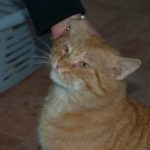 Chivers Cat New Photos