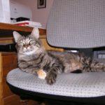 Beautiful Britta Cat