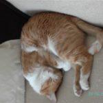 Lucky Eddy Cat