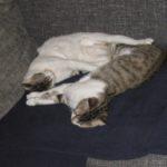 Snoopy & Luke Kittens