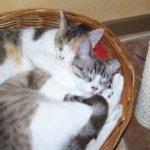 Luki & Mimi Cats Happy Photos