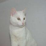 Meet Pretty White Cat Martha
