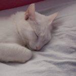 Happy White Cat Martha