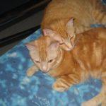 Rufus & Robin Snuggle Cats