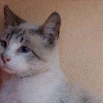 EWN 20/05: The Feral Kitten Dilema