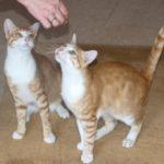 Meet Benny & Olli Kittens