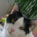 Very Cosy Freddy Tomcat