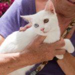 White Sister Kittens