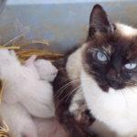 Calypso Cat's Family