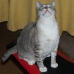 Character Cat Albi