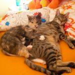 Lexi Kitten & Girlfriend