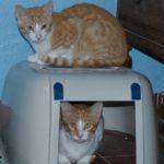 Mungo & Bongo Ginger Boys