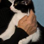 Meet Maria Kitten