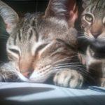 Gus, Nina & Petra Kittens