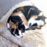 Josephine – A Pretty  Little Torty