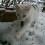 Diane's Baby Kittens