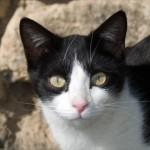 Taj & Mica – Brother & Sister Kittens