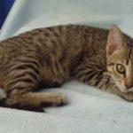 Another gorgeous Little Kitten