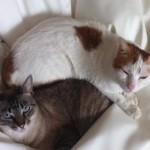 Suri & Pompito's New Life