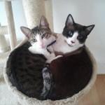 Miso & Cody Kitten Friends