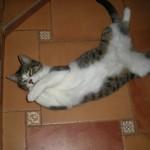 Fifi, Pepo & Mofi Kittens