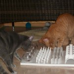 Bugsy & Molly – Beautiful Kittens
