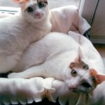 Tia & Maria – Pretty Sister Cats
