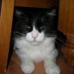 Grison A Gentle Affectionate Cat