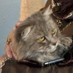 Pandora – A VERY Photogenic Cat