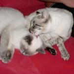 Shadow Kitten Finds True Love