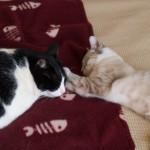 MY Cat Oscar's Anniversary