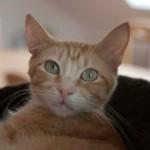 Beautiful Cat Bonnie