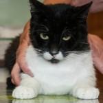 Felix – A Charming, Special Cat