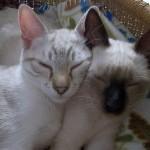 Miro & Mejut
