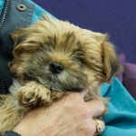 Puppies – Peque, Bollilo, Candy & Lusy