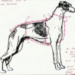 Made To Measure Galgo Coats